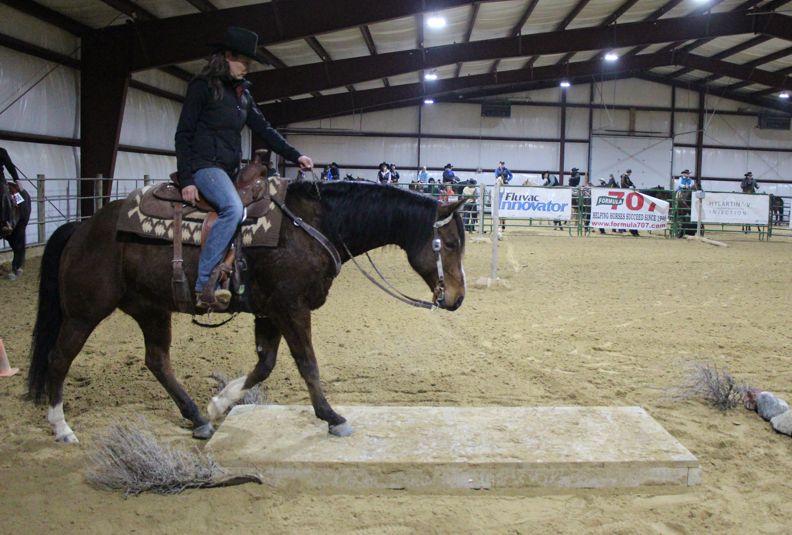 Snapshot Gallery - Kluz Performance Horses